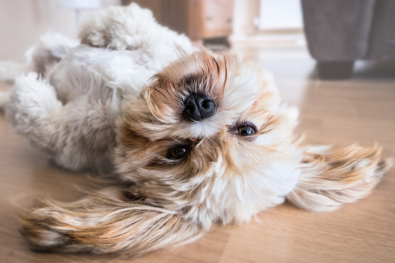 How To Remove Dog Smells From Your Home